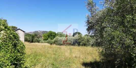 Terreno con ulivi in vendita a Monte San Giov. Campano Rif.56